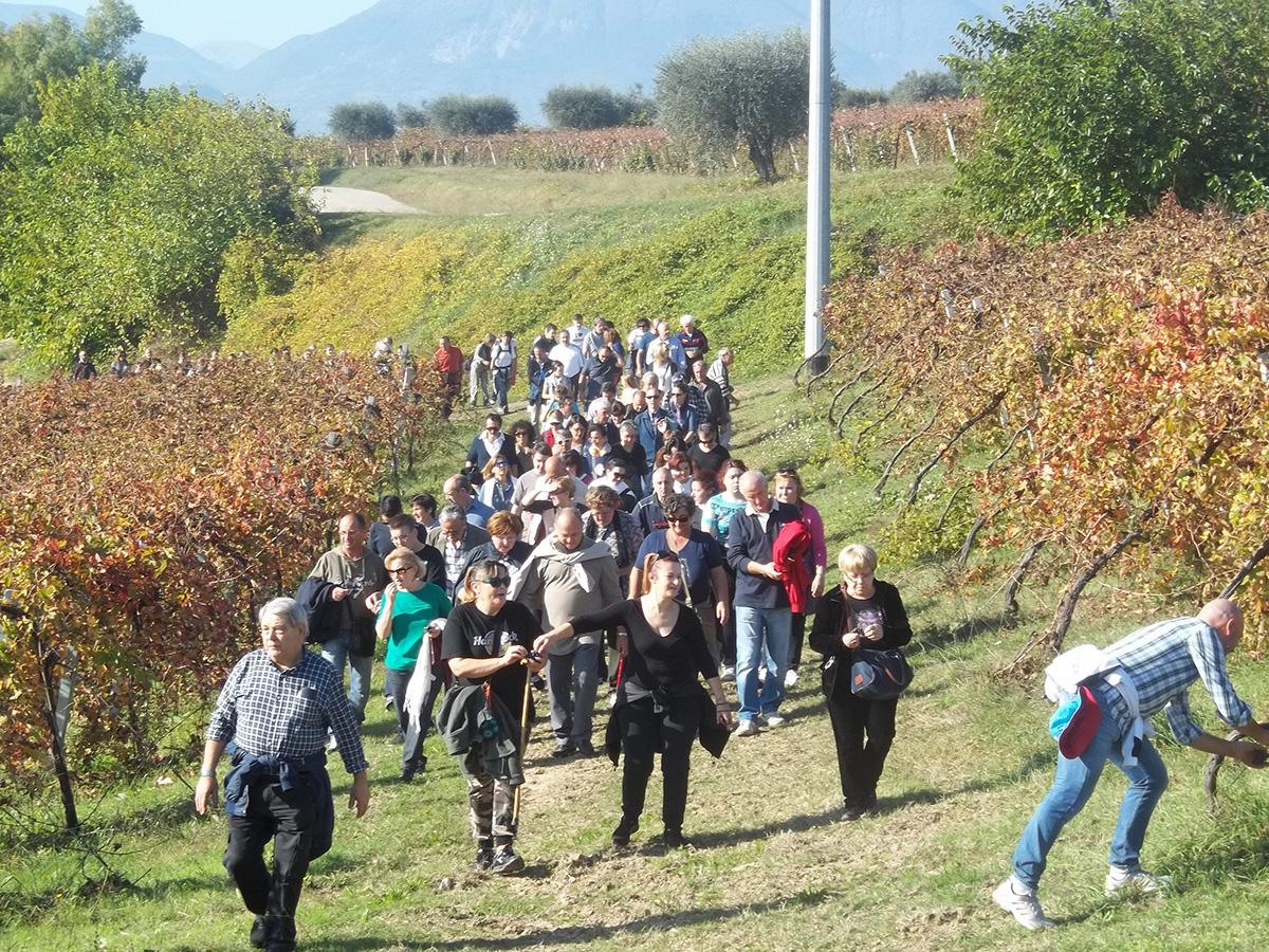 Sentiero Di…Vino 2013